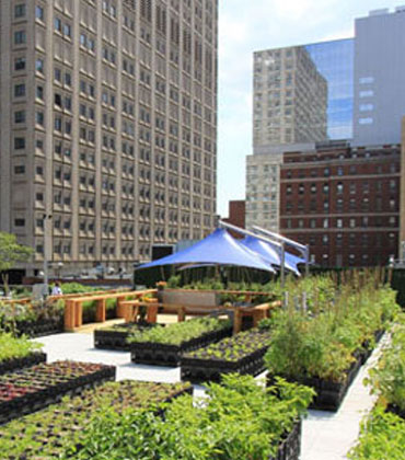 Urban Farms: Transforming the World's Agricultural Landscape