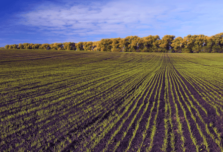 Agriculture Advancements: Paving the Way for Smarter and Sustainable Farming