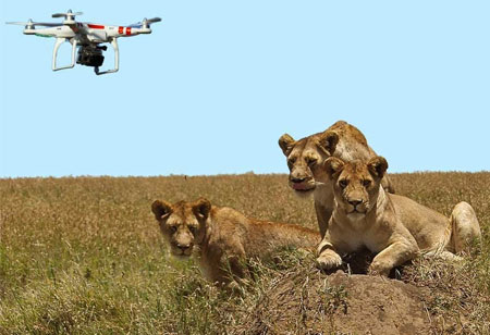 The Advantages of Using Drones for Livestock Farming