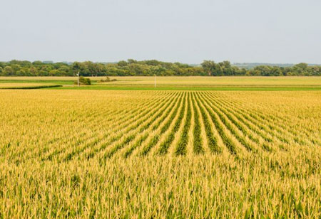 Precision Agriculture: To Boost Yields and Curb Waste