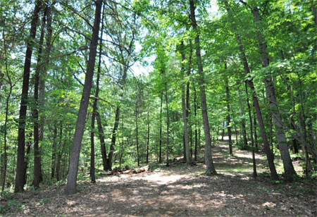 4 Best GIS Strategies for Effective Forest Management